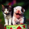 CAT AND DOG FRİENDSHİP PHOTOS