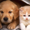 CAT AND DOG FRİENDSHİP