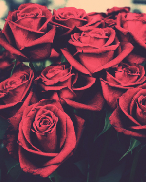 Red Roses Tumblr Background (2)