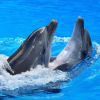 DOLPHİN WALLPAPERS (3)