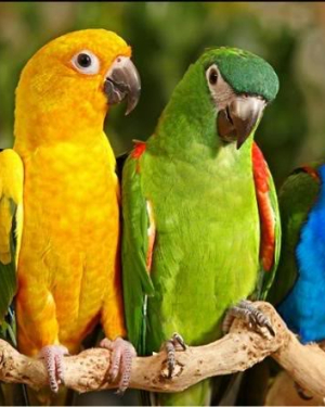 HD Birds Picture