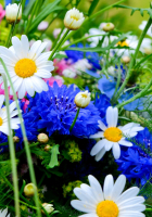 HD Flowers Picture