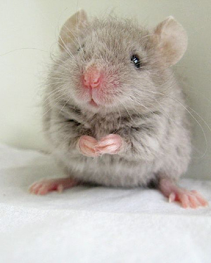 hd mouse picture