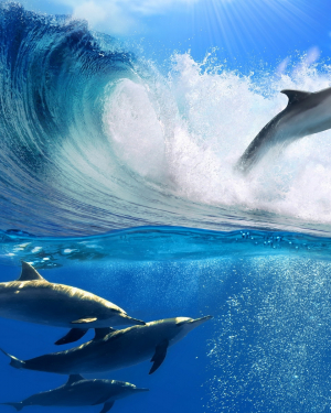 DOLPHİN WALLPAPERS (2)
