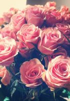 Tumblr Roses Backgrounds