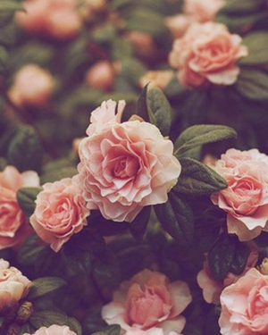 flower wallpaper vintage