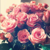 Tumblr Roses Backgrounds | Nature Wallpaper, Cool ... Pink Roses Wallpaper Tumblr