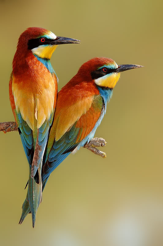 Hd Birds Picture 1 Jpg Hd Wallpapers Hd Images Hd Pictures