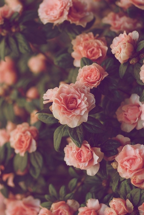 Vintage-roses-tumblr-wallpaper-7.jpg | HD Wallpapers, HD ...