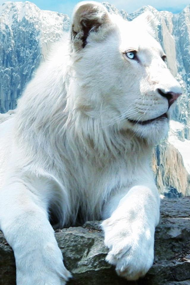 White Lion 19 Hd Wallpapers Hd Images Hd Pictures