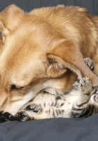 cat and dog friendship-12