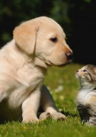 cat and dog friendship-14