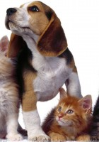 cat and dog friendship-15