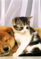cat and dog friendship-16
