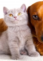 cat and dog friendship-18