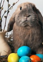 Easter-Eggs-HD-Wallpapers-56
