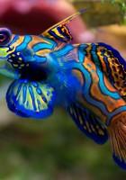Fish Wallpapers-1