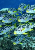 Fish Wallpapers-2