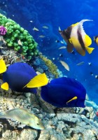 Fish Wallpapers-24