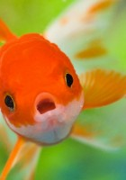 Fish Wallpapers-25