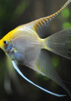 Fish Wallpapers-26