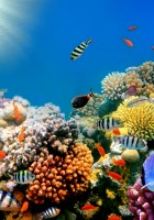 Fish Wallpapers-27