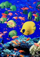Fish Wallpapers-3