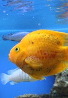 Fish Wallpapers-32
