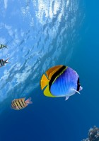 Fish Wallpapers-35