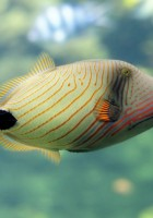 Fish Wallpapers-42