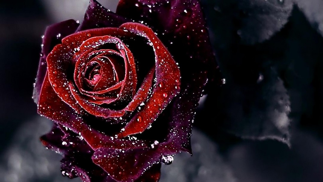 Red Roses Tumblr Background 1 Hd Images And Pictures Picamon