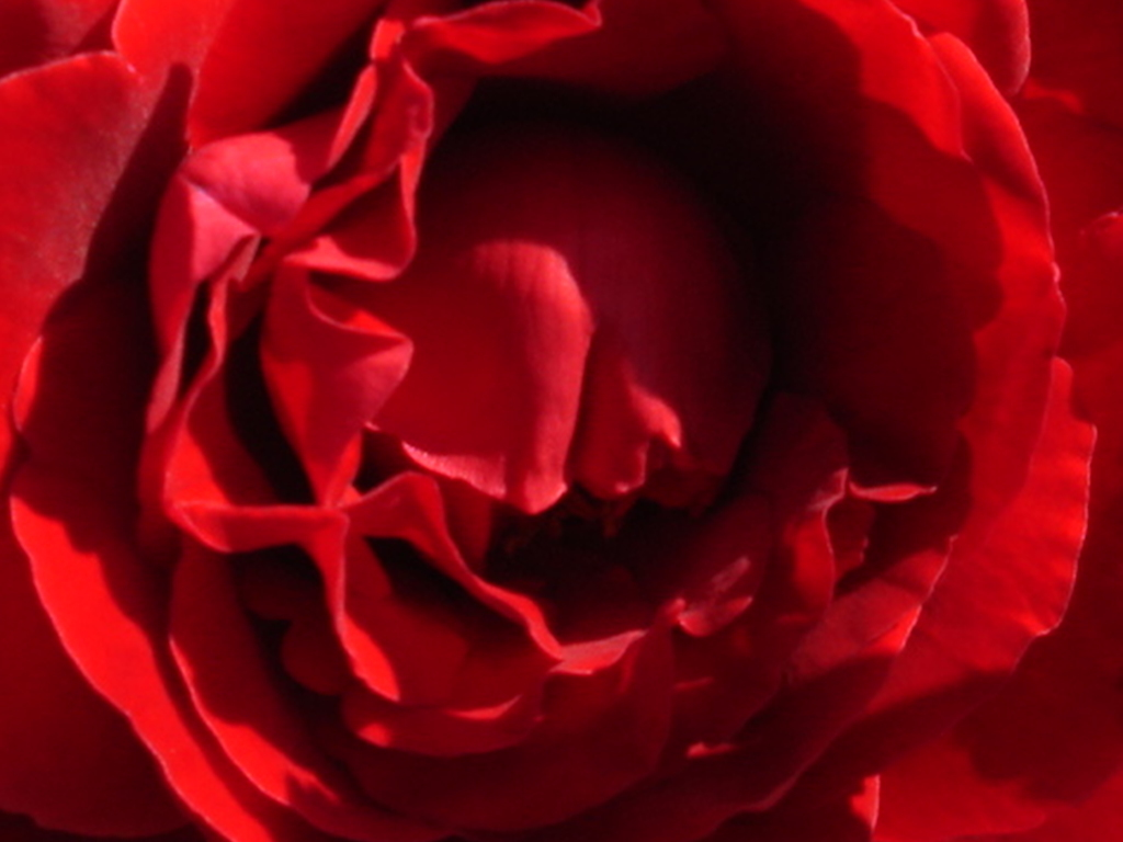 Red Roses Tumblr Background-20 | HD Wallpapers, HD images ...