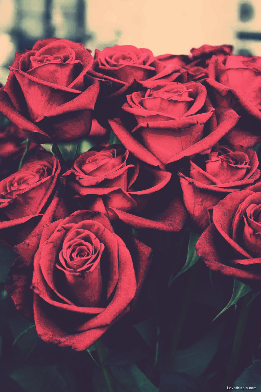 Red Roses Tumblr Background 3 Hd Wallpapers Hd Images Hd Pictures