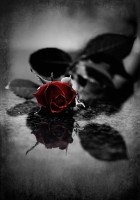 Red Roses Tumblr Background-34