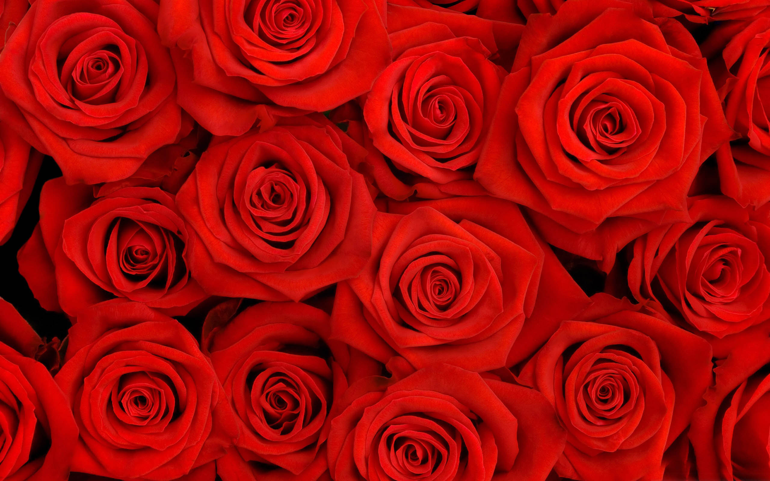 Red Roses Tumblr Background-36 | HD Wallpapers, HD images ...