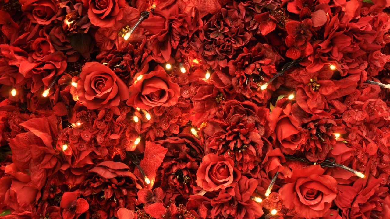 Red Roses Tumblr Background 6 Hd Wallpapers Hd Images Hd Pictures