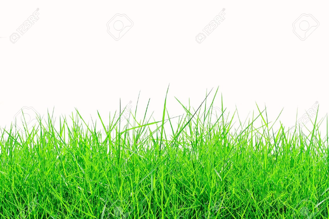 fresh green grass18 hd wallpapers hd images hd pictures