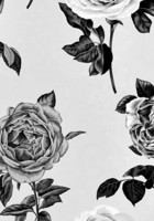 rose backgrounds tumblr hd