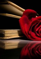 Red-rose-wallpaper-1.jpg