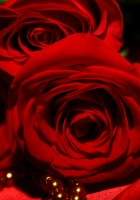 Red-rose-wallpaper-2.jpg