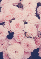 Floral-tumblr-backgrounds-2.png