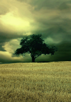 New-Cell-Phone-Graphics-and-Wallpapers124