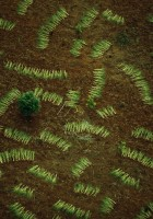 drying-fronds_wallpaper