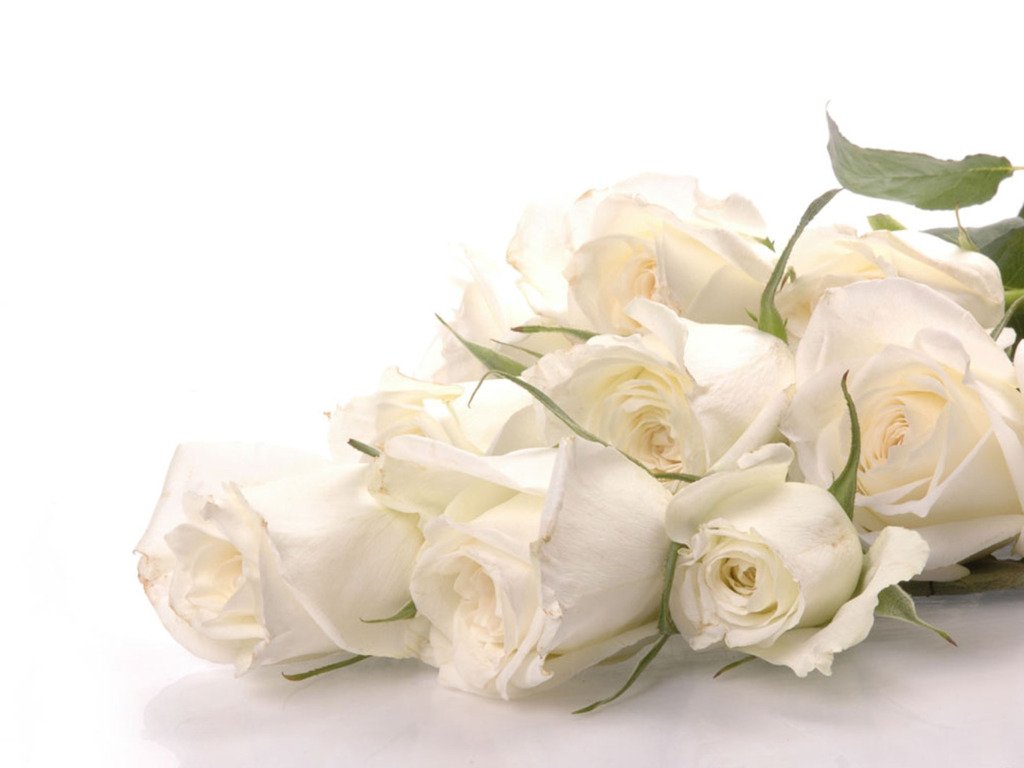 White Rose HD Wallpapers2