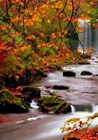 fall-wallpapers-pictures