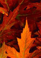 free-hd-fall-wallpapers-for-desktop