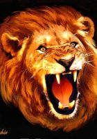 Lion-head-hd-pictures-2.jpg