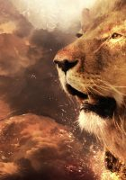 Lion-head-hd-pictures-8.jpg